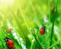 Bugs in Your Lawn
